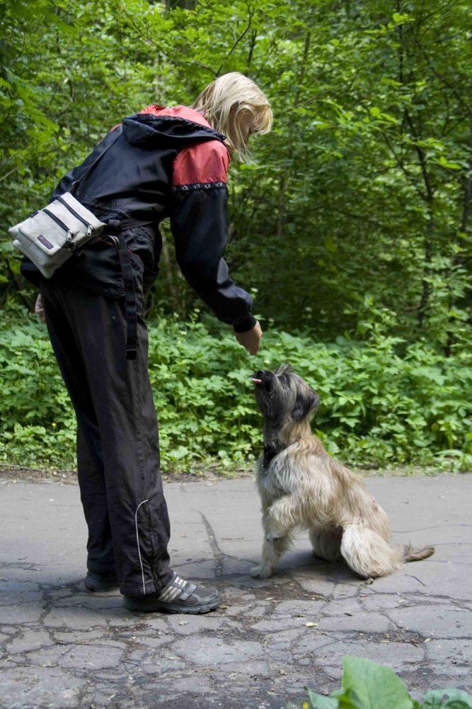 Дрессировки рабыни собаки рассказ
