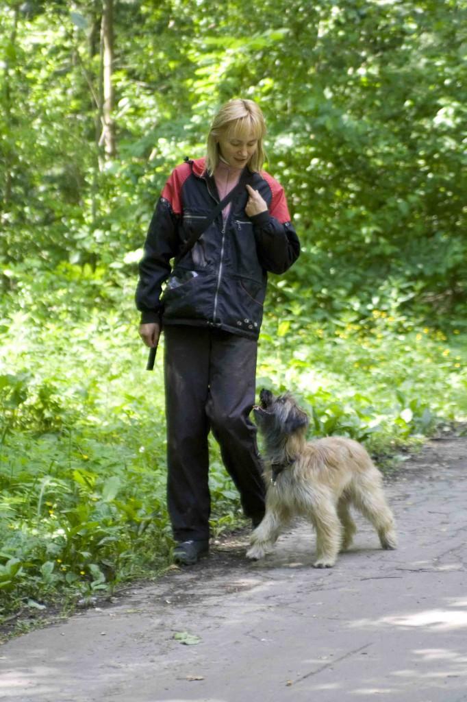 Как научить собаку концентрировать внимание на лице хозяина?
