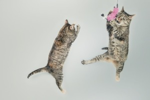 jumping-cute-playing-animals