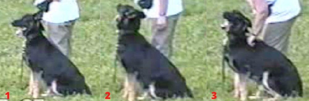 Конфликт с собакой