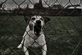 Кого кусают собаки? (эпидемиология покусов)