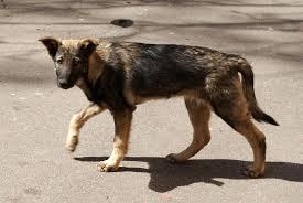 Почему нападают бездомные собаки?