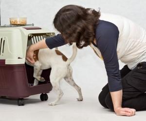 Как приучить собаку к клетке