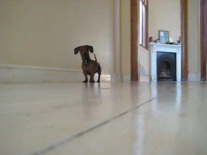Фэн-шуй по собачьи