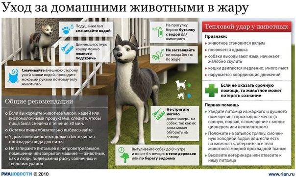 Как спасти собаку от жары?