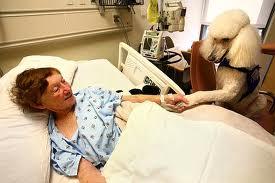 Собаки – детекторы раковых опухолей