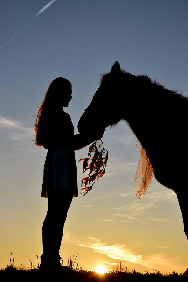 Как лошади узнают хозяина и как их удивить