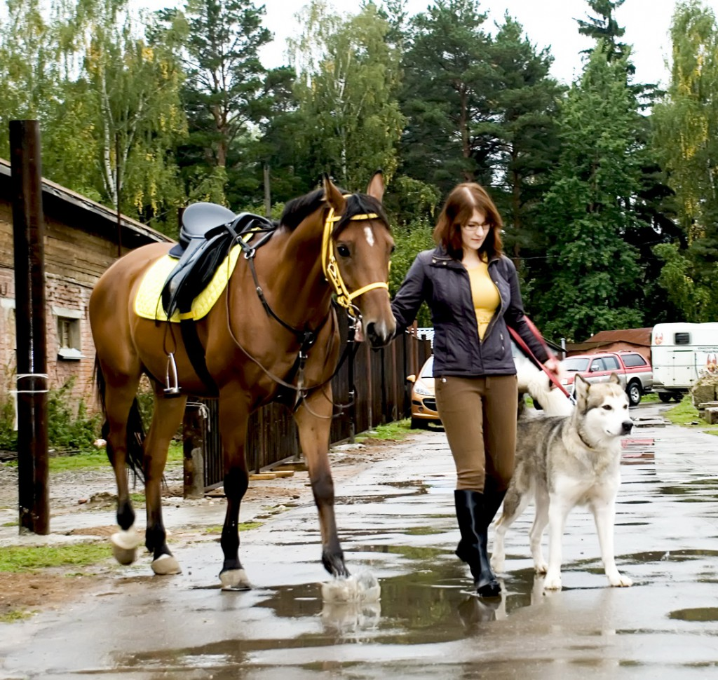 travel near stables