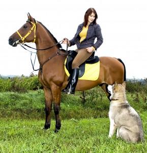 Пес, конь и их хозяин