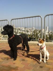 Как везти собаку в Израиль