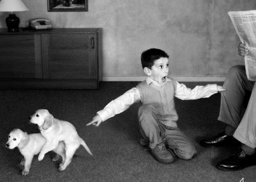 """""""Мне неловко об этом говорить... Но мой щенок """"трахает"""" ноги и подушки!"""""""