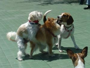 Скучает ли сучка за щенками