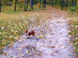 Собака убегает. Что делать?