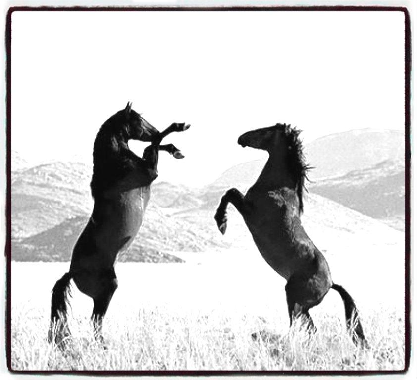 Любовь лошадей