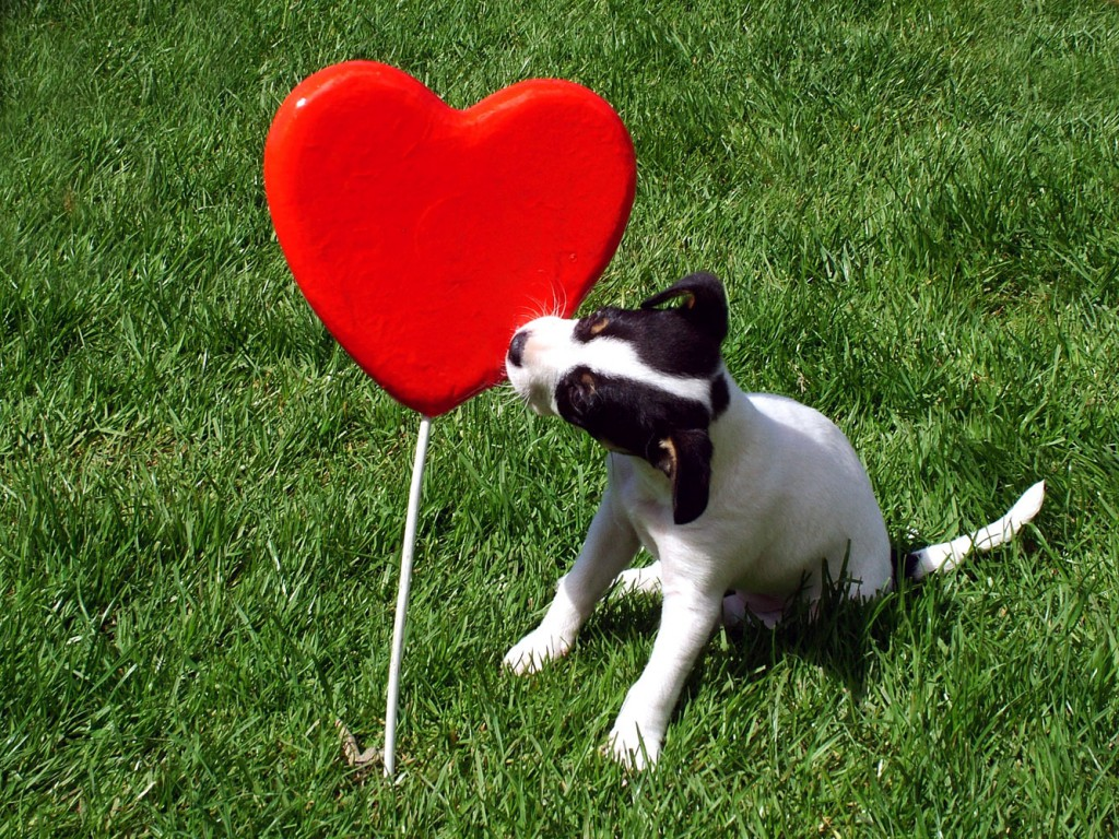 stockvault-puppy-kissing-a-heart109805