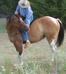 Кликер-тренинг для лошадей