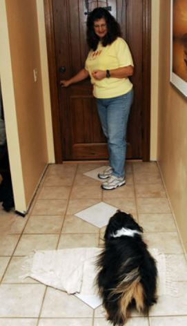 Щенок и гости в доме