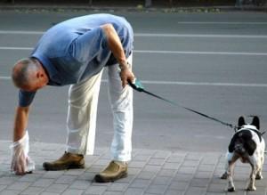 Как убрать на улице за собакой?
