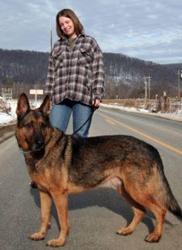 Кинологам: почему дрессировка чужих собак отличается от дрессировки собственной собаки?