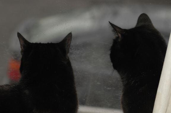 Кошки дерутся, хотя раньше дружили. Что делать?