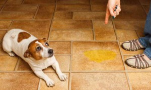 Why does my dog pee indoors?