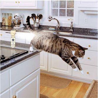 spray system cats