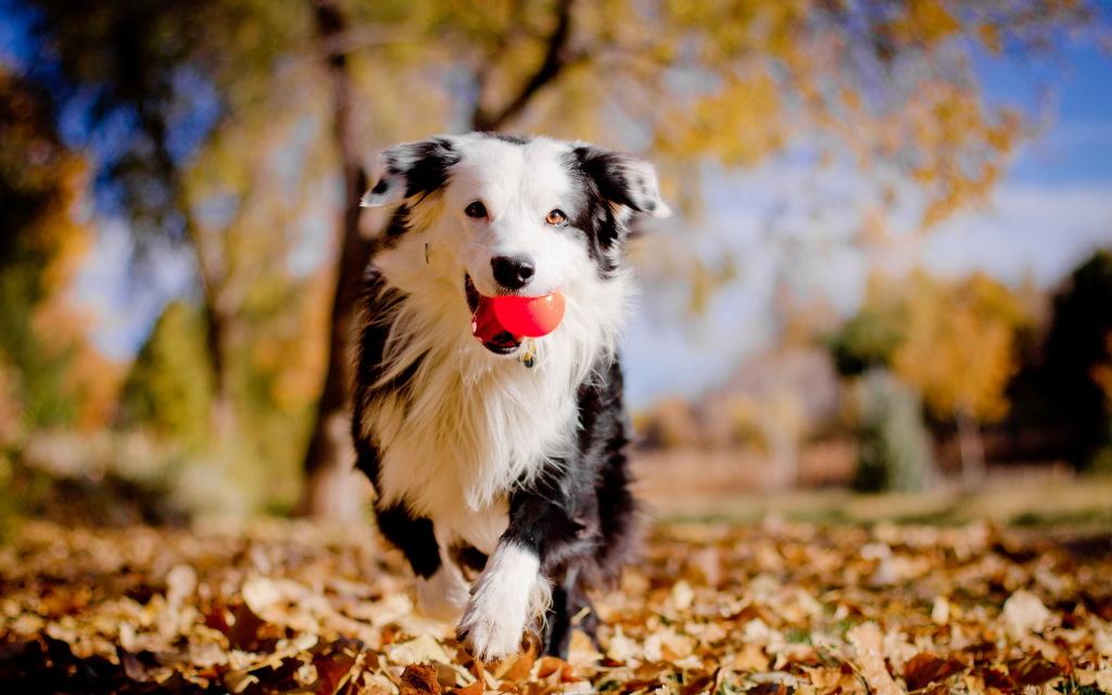 adorable-dog-pics