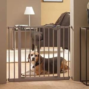 забор дома для собаки