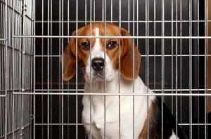 perros-abusados
