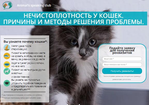cat-webinar