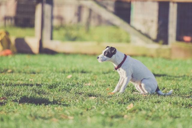 Гуманно ли кормить собаку только за работу
