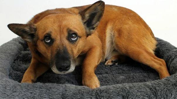 Здесь собака испуганно смотрит исподлобья: это ее обычное состояние или только во время фотографии?