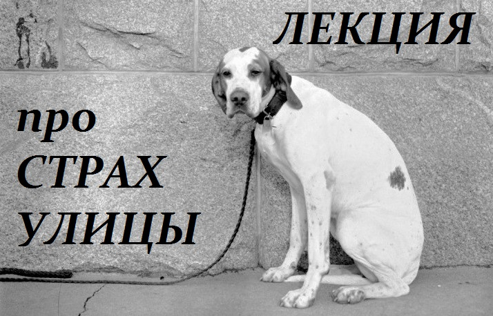 dog_fear_lecture