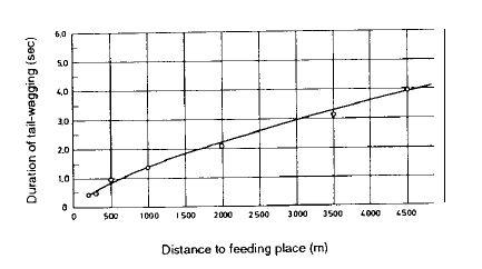 Duration of tail-wagging dance – Продолжительность танца с вилянием брюшком (секунд) Distance to feeding place – Расстояние до места кормления (м) Рис. 2. Продолжительность пробега с виляния брюшком для мест кормления, находящихся на разных расстояниях, на основе данных видеозаписей.