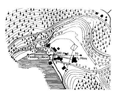 Рис. 9. Наблюдательный улей в Брунвинквилле на Вольфгангзее и линия полета группы пронумерованных пчел на место для кормления в направлении 200 м на запад.