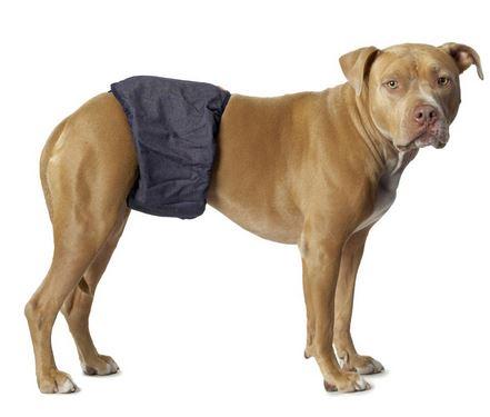 памперс для кобеля-собачий
