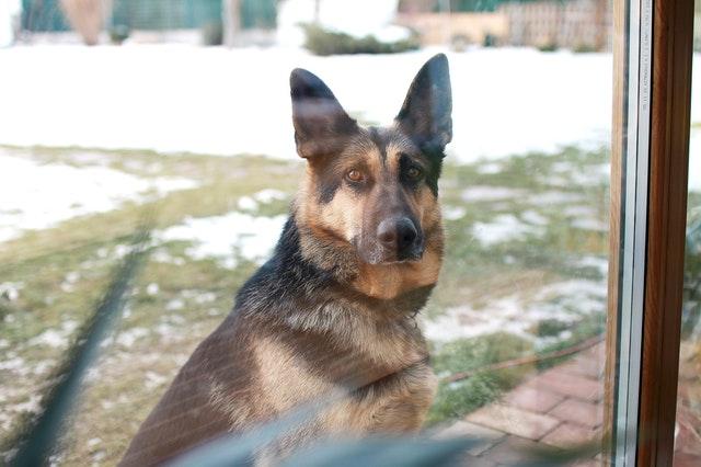 Породоспецифичное поведение собак
