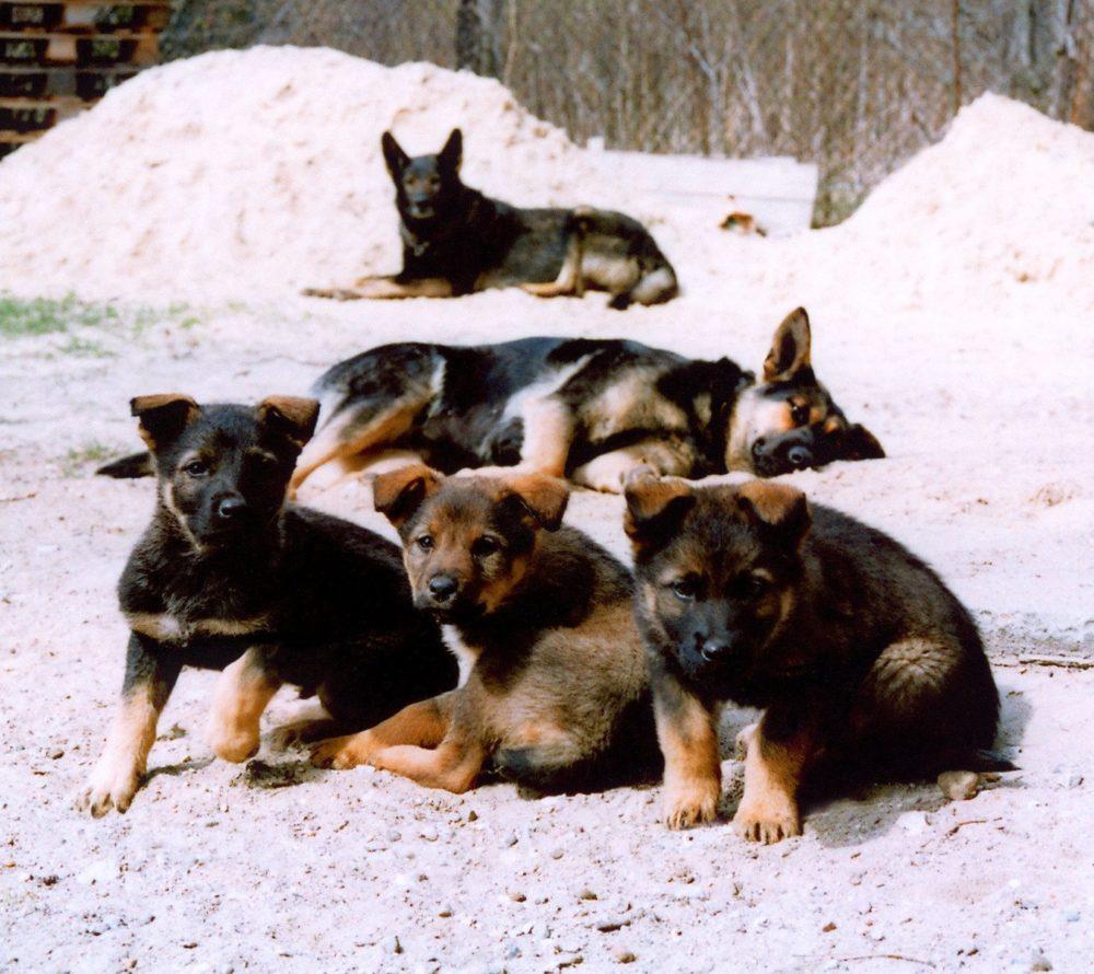 Лучший возраст для переезда щенка в новый дом