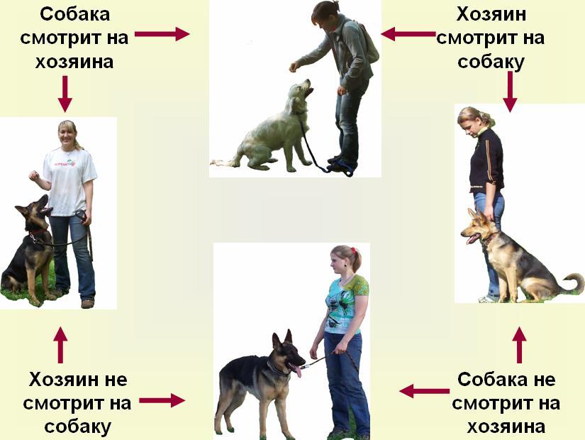 схема параметров внимания