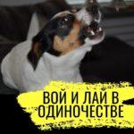 5 октября: 6 новых заметок и знакомство с собачьим книжным клубом