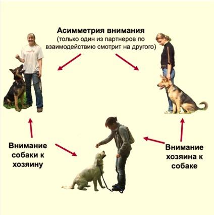 Почему собака ведет себя так?
