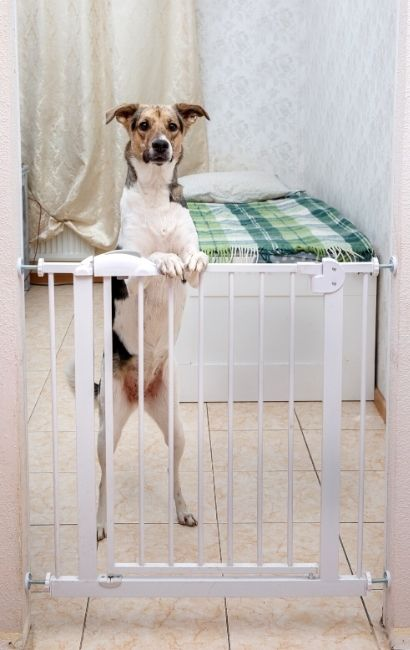 Учим собаку оставаться одной, когда мы дома (для решения проблемы воя)