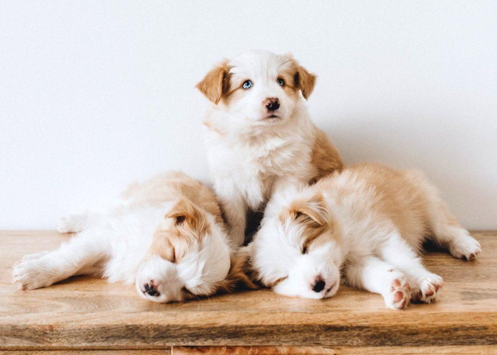 Почему сейчас так много собак с тревожным расстройством?