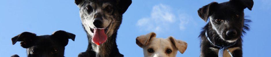 Дрессируйте собак самостоятельно! (статьи)