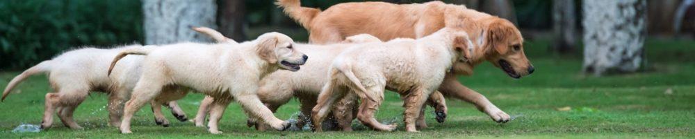 Мыть ли щенка?