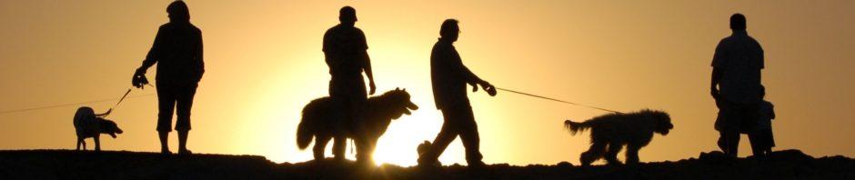 Неврологические причины стереотипии у собак