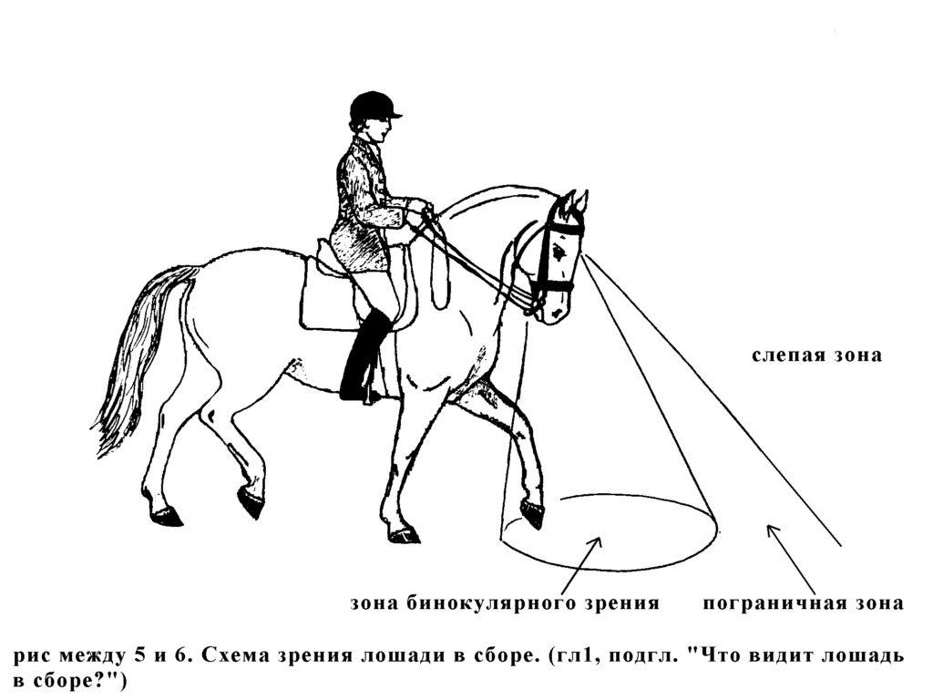 Что видит лошадь в сборе?