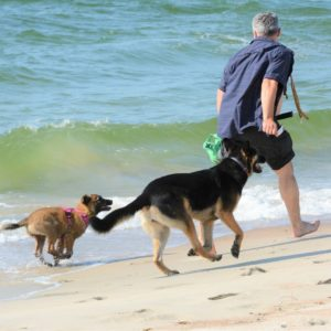 Как познакомить новую собаку со старой?