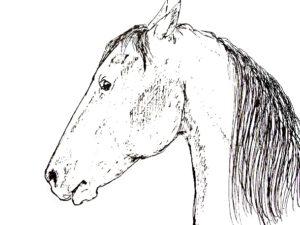 Поймите свою лошадь