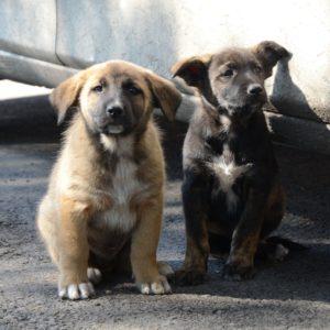 Чем можно заразиться от бесхозной собаки?